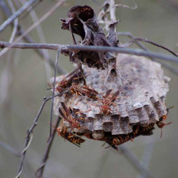 Hidden Wasp Nest