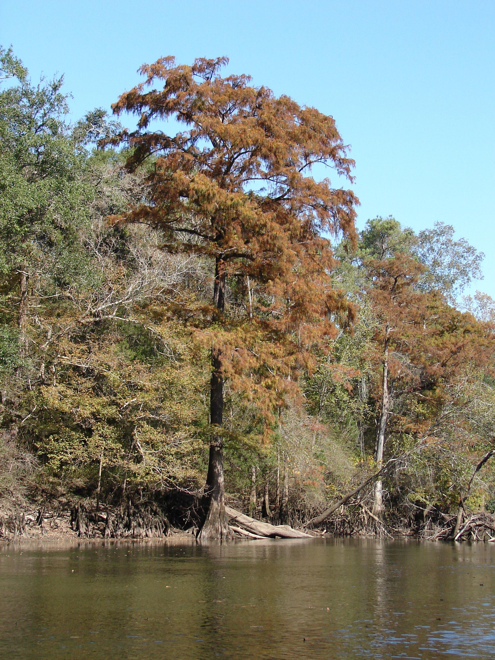 jackson-calhoun-gulf-counties-stock-photos-florida-panhandle-chipola-river-linda-bateman