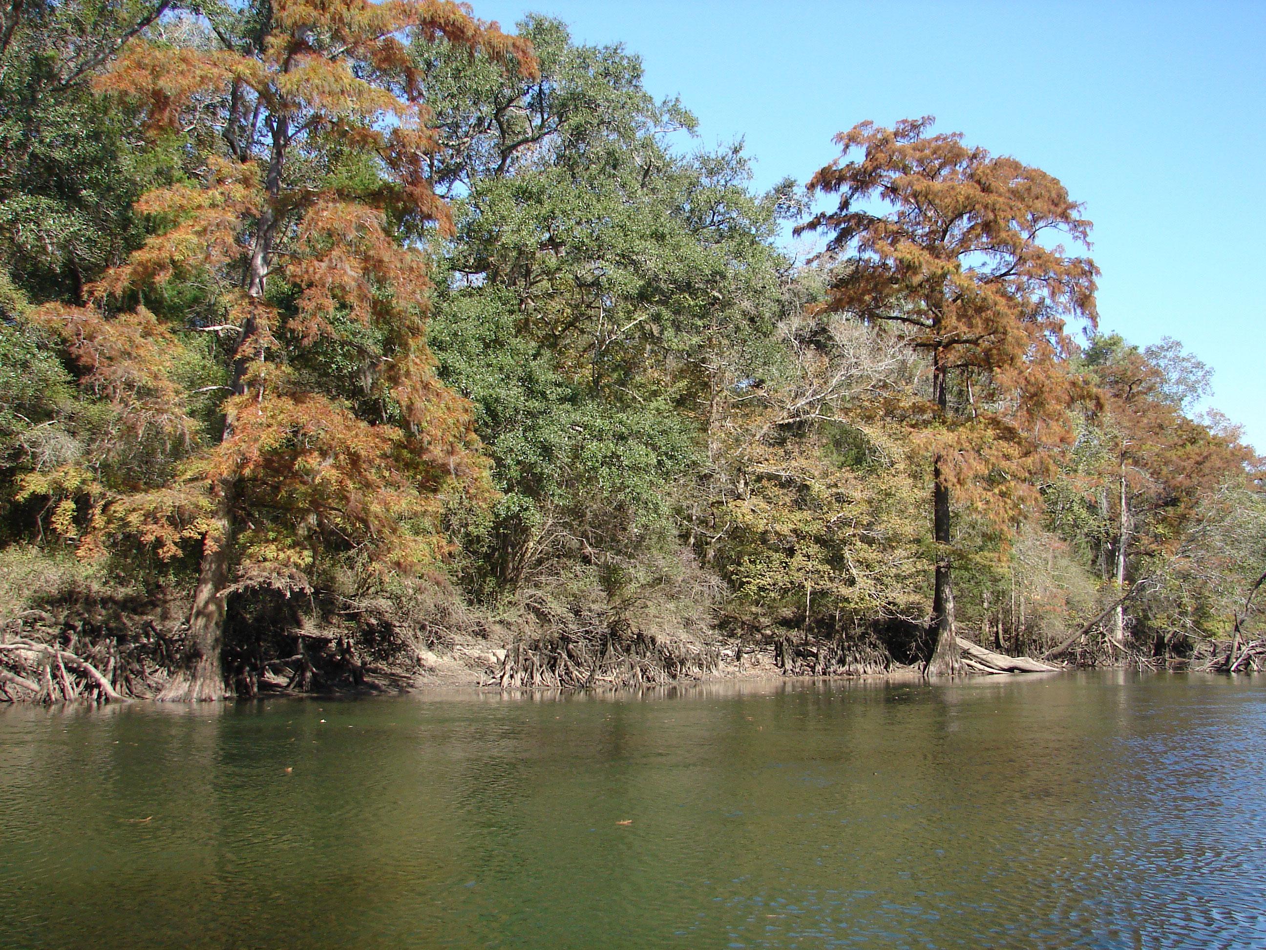 popular-tubing-destination-stock-photos-florida-panhandle-chipola-river-linda-bateman
