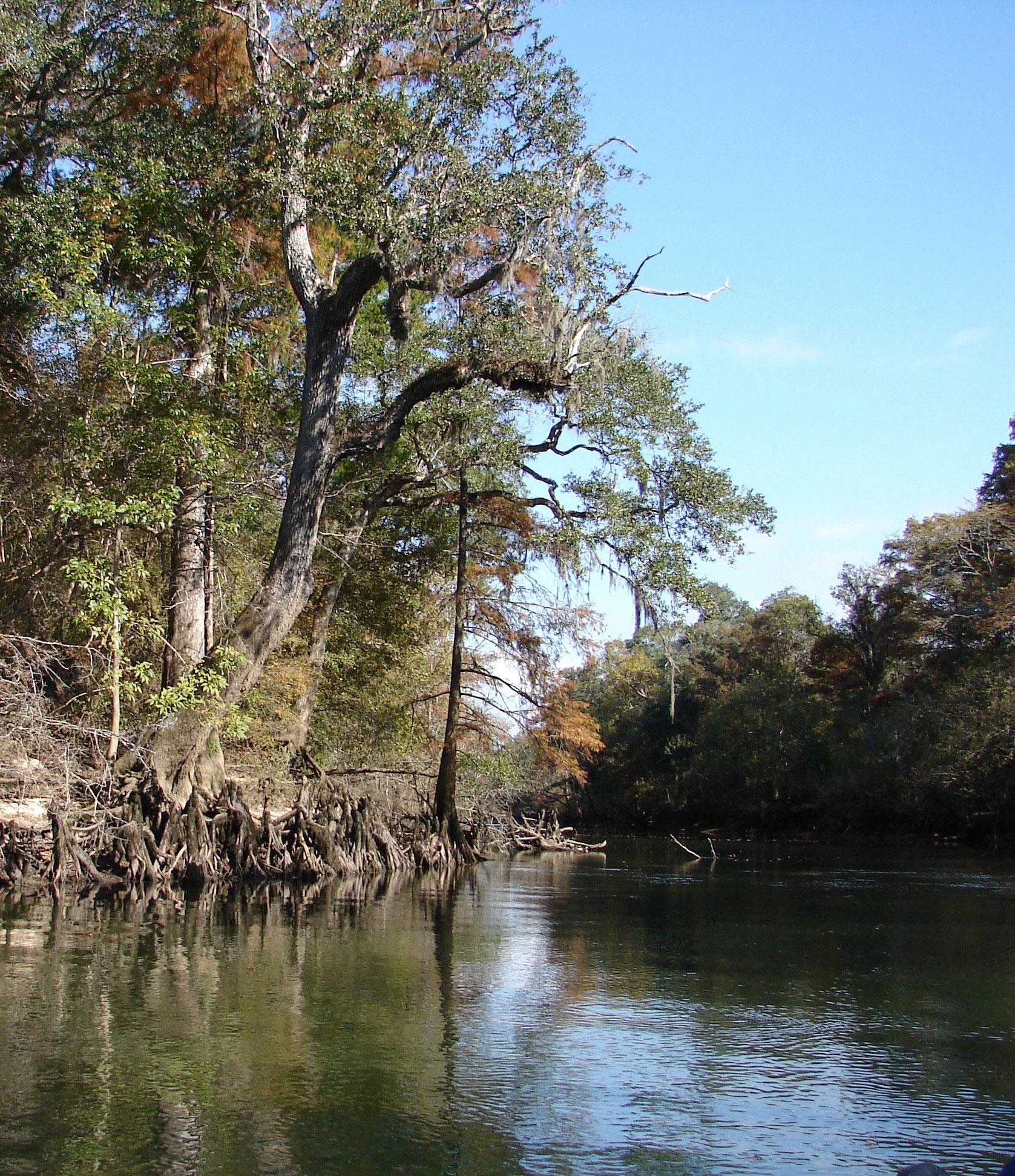 state-designated-paddling-canoeing-kayaking-trail-stock-photos-florida-panhandle-chipola-river-linda-bateman