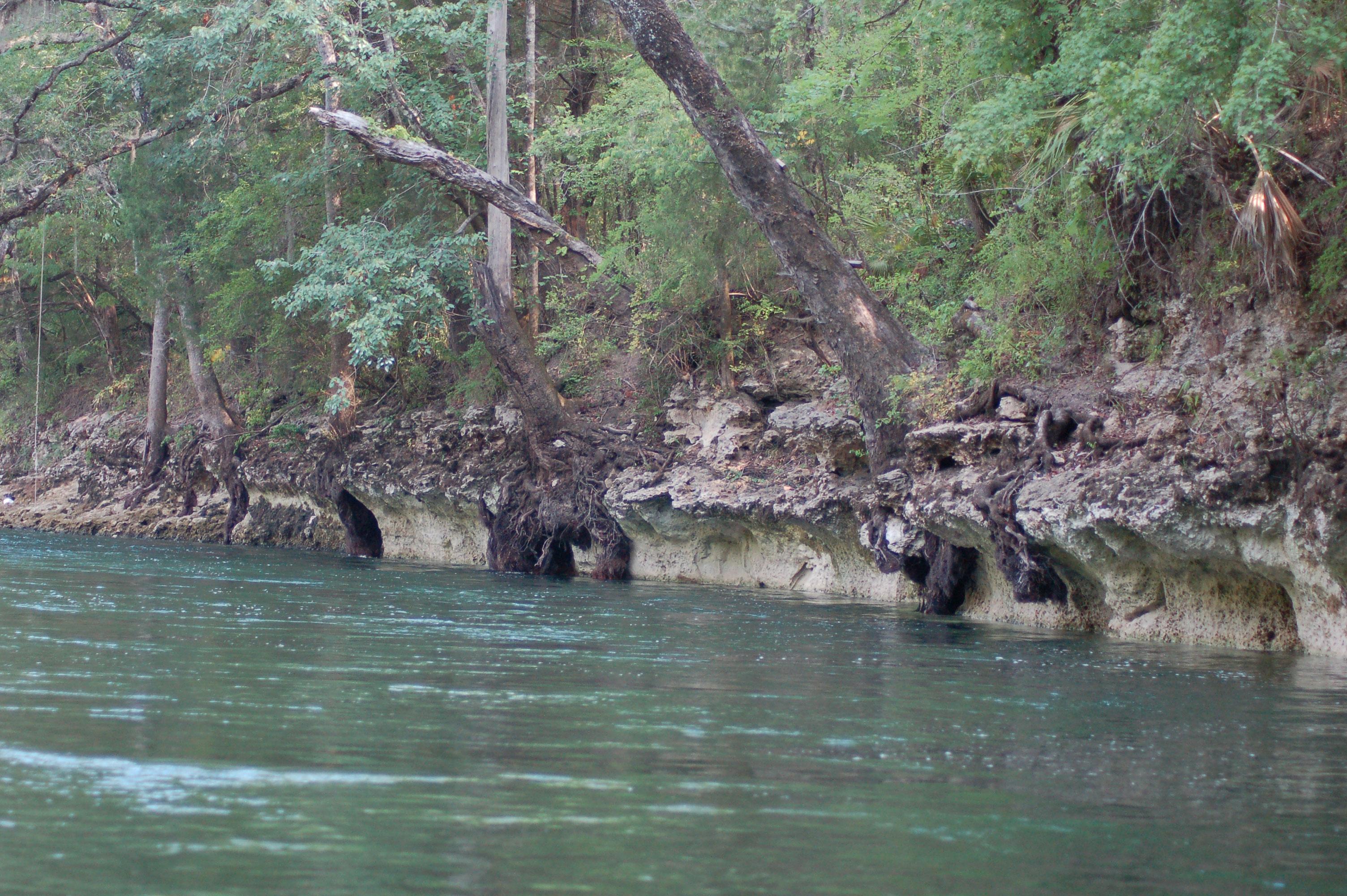 limestone-karsts-stock-photos-florida-panhandle-chipola-river-linda-bateman