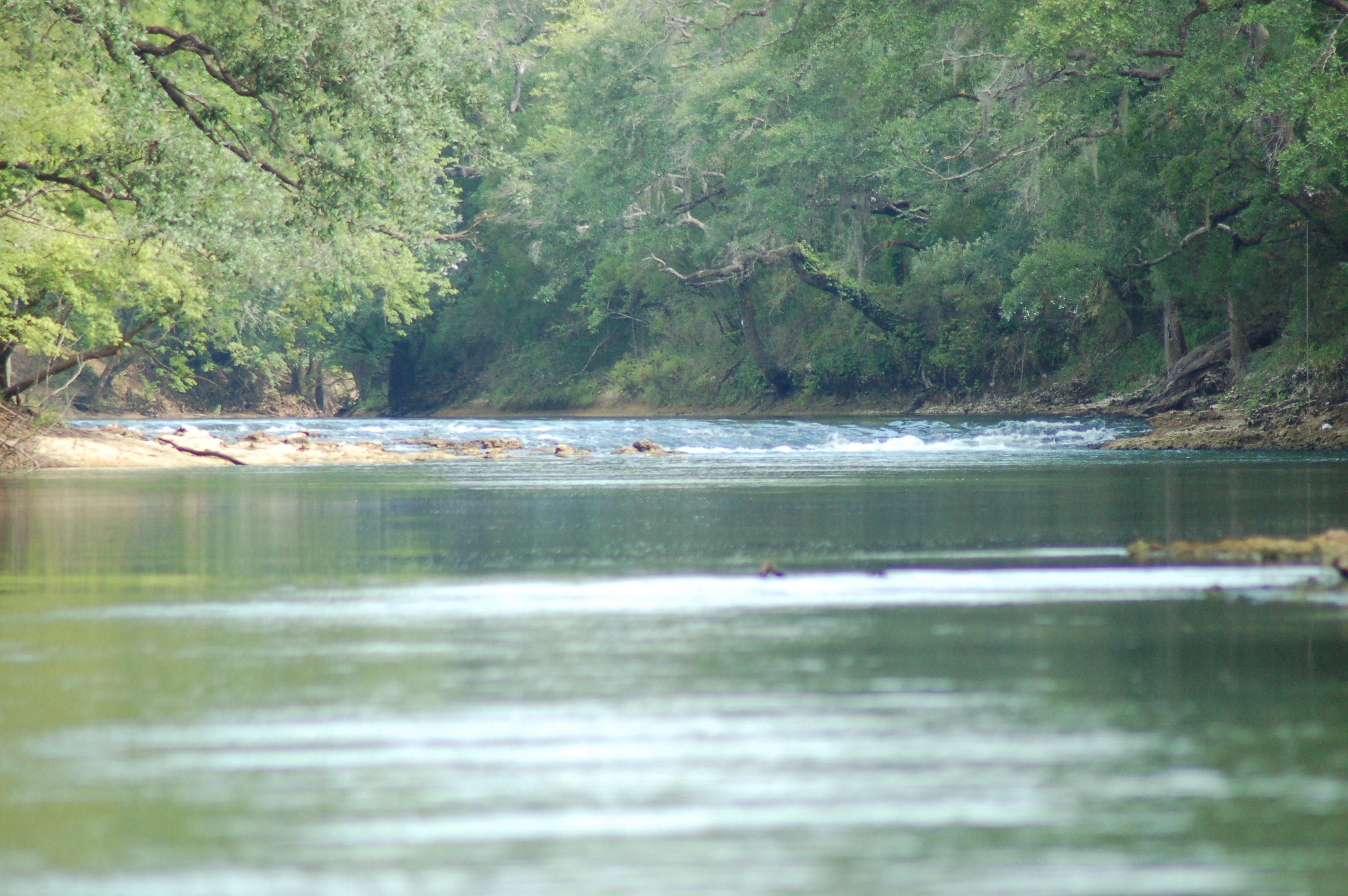 Look and Tremble - Chipola River, Florida Panhandle - Linda Bateman Stock Photos