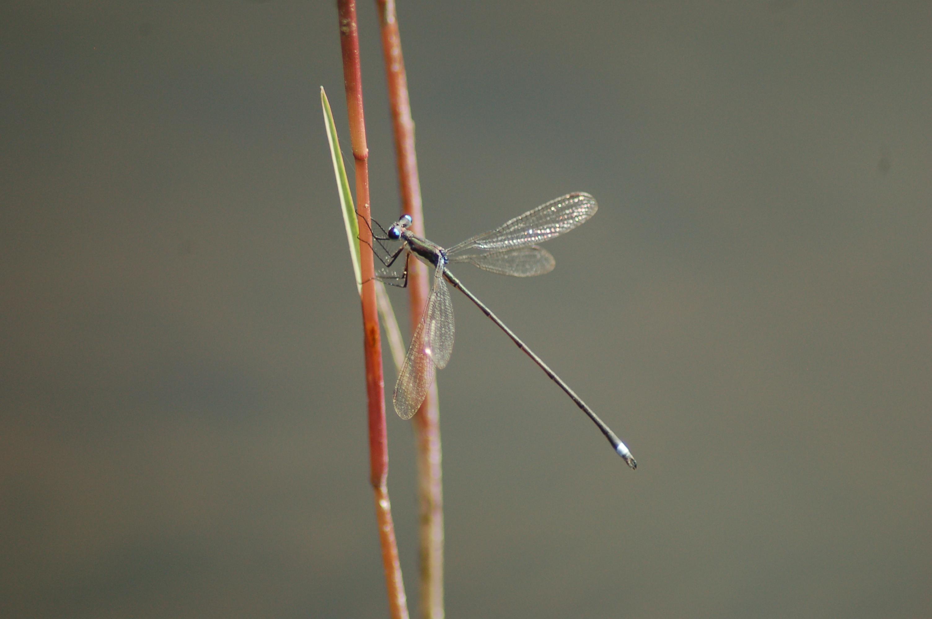stock-photos-nature-small-linda-bateman-damselfly