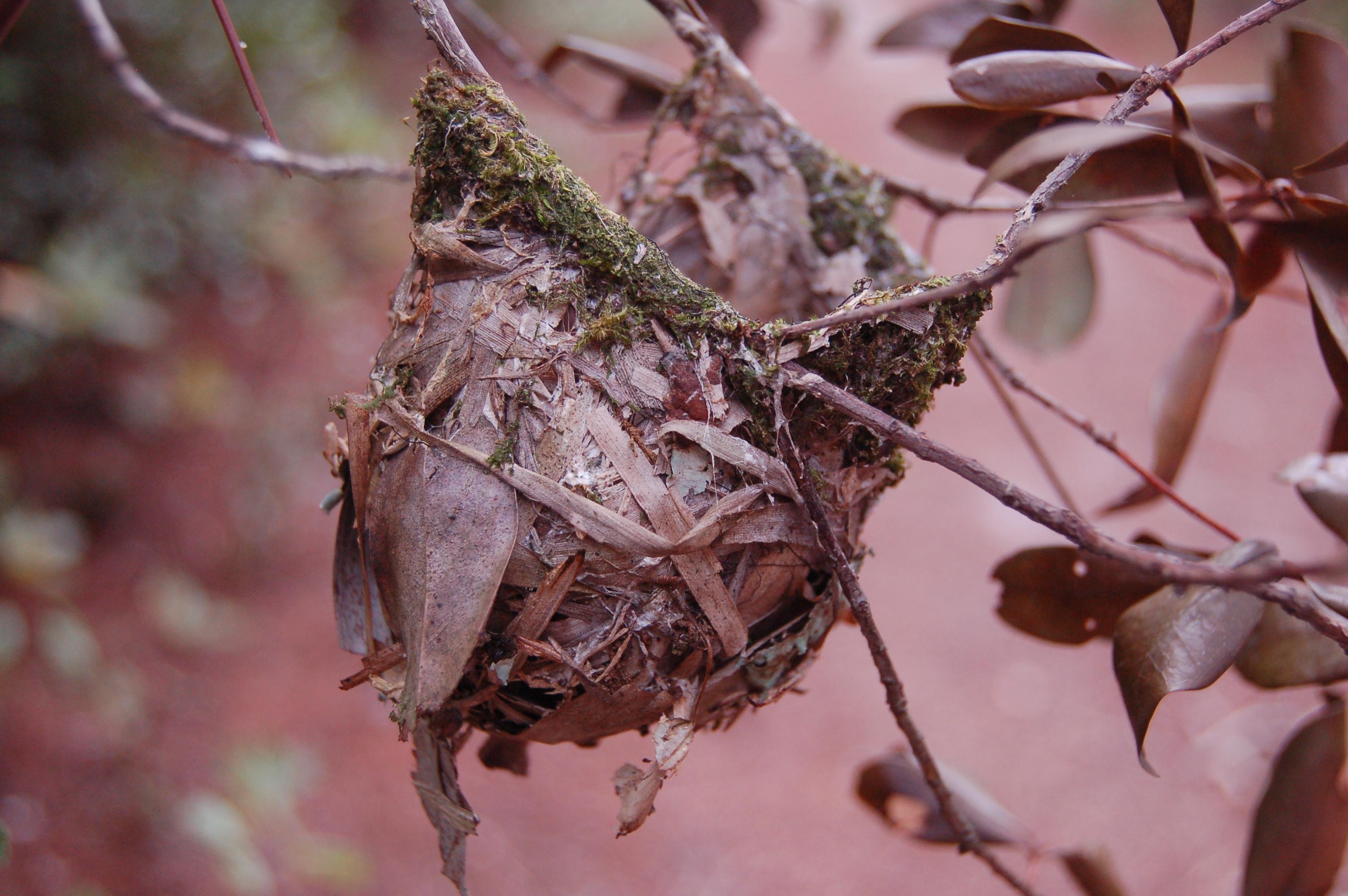 stock-photos-nature-small-linda-bateman-small-nest